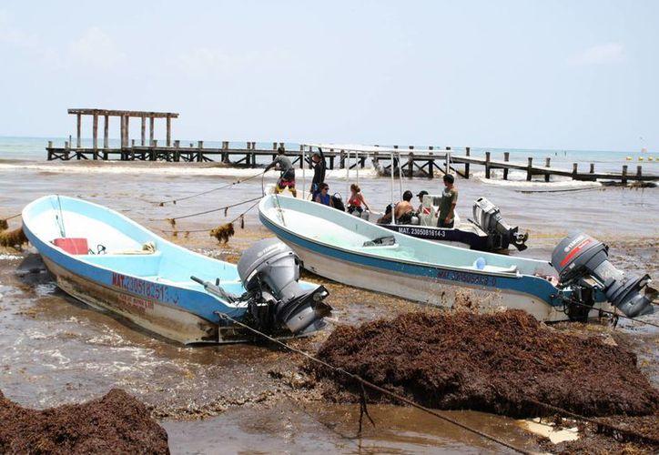 Náuticos de Playa del Carmen atribuyen al sargazo las fallas en sus embarcaciones. (Octavio Martínez/SIPSE)