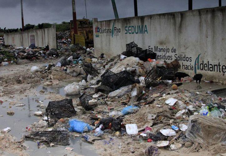 Dos mil toneladas de basura serán compactadas para mejorar el período de vida del relleno sanitario. (Harold Alcocer/SIPSE)