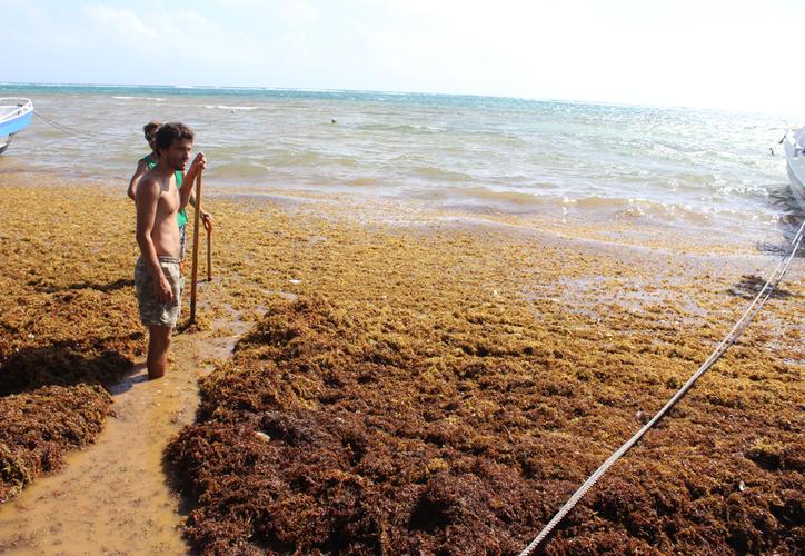 La inversión en la primera etapa de recolección de alga fue de 62 millones de pesos del orden federal. (Daniel Tejeda/SIPSE)