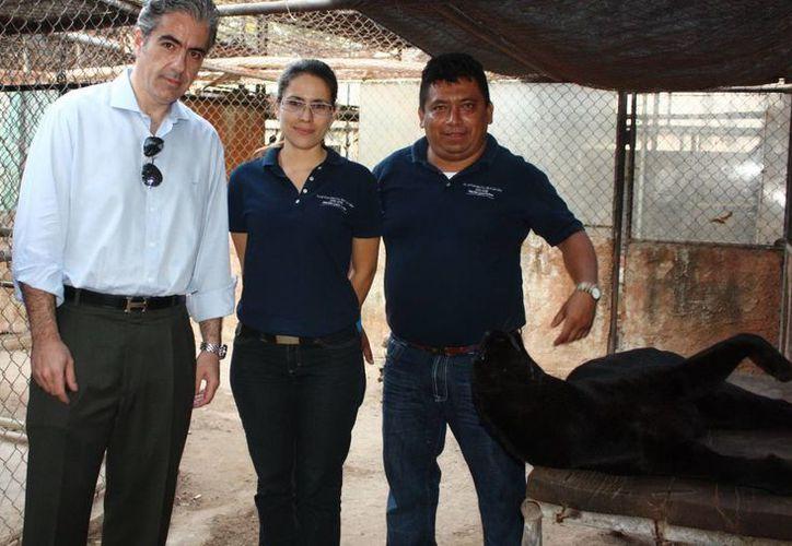 Personal del CIVS que protegerá al leopardo negro maltratado. (SIPSE)
