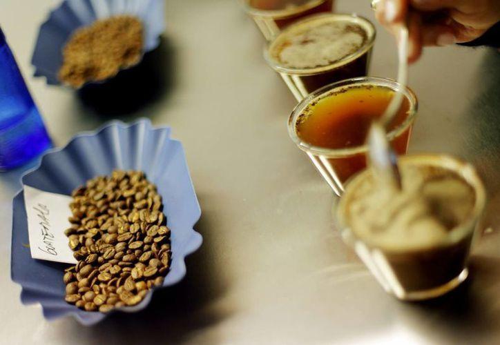 Expertos señalan que el café contiene entre 10 % y 12 % de cafeína, sustancia también presente en gaseosas y bebidas energizantes y cuyos efectos estimulantes tardan en desaparecer entre 60 y 90 minutos. (Archivo/EFE)