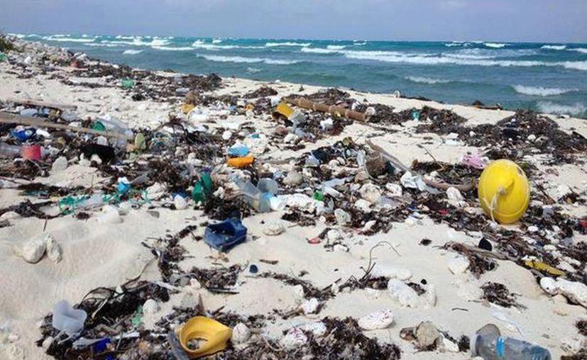 El inegi no acepta que las Áreas Naturales Protegidas son invadidas por desechos acumulados en depósitos a cielo abierto. (Enrique Mena/SIPSE)