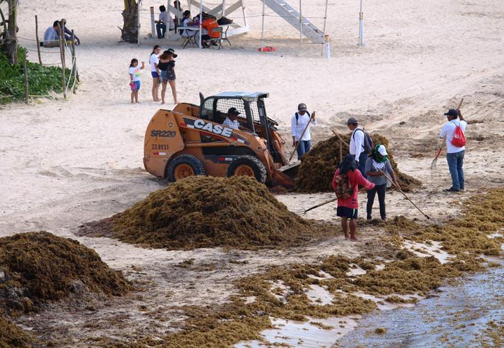 Los trabajos incluirán un proceso para la limpieza del agua. (Adrián Barreto/SIPSE)