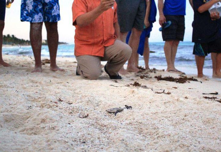 La playa donde ocurrió este incidente se ubica a 30 kilómetros al sur de la ciudad, cerca de los límites con el municipio de Tulum. (Octavio Martínez/SIPSE)