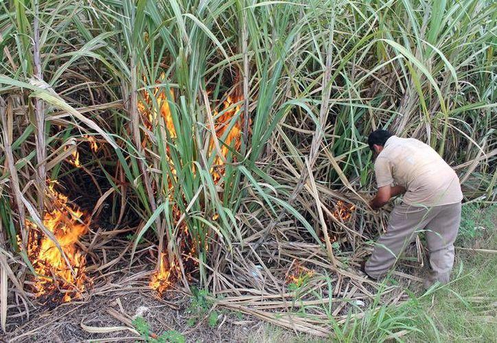 Con la medida se busca prevenir los incendios forestales en el estado. (Edgardo Rodríguez/SIPSE)