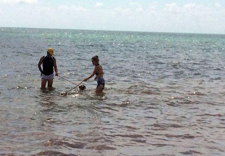 El cuidado no sólo es que se limpie las heces en la playa sino que estos no afecten la estancia de más visitantes. (Luis Soto/ SIPSE)