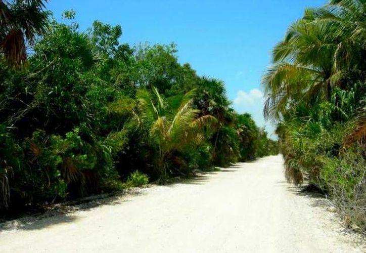 La zona protegida cuenta actualmente con cinco accesos. (Foto de Contexto/SIPSE)