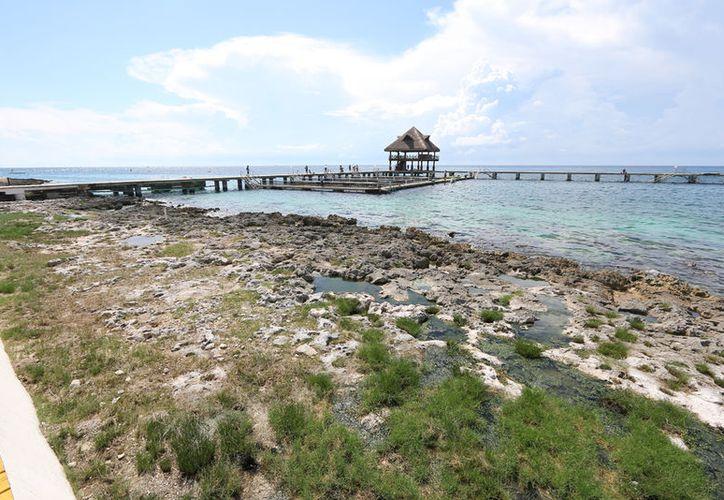 Se comentó que en la isla es necesario la presencia de una oficina de autoridades ambientales. (Gustavo Villegas/SIPSE)