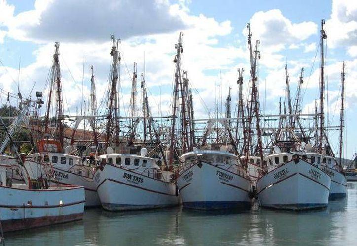 Los pescadores de camarón ya tienen permiso para poder capturar la especie en el Océano Pacífico. (Agencias)