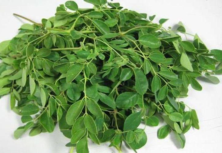 La moringa contiene diversas vitaminas y minerales como el  calcio, cobre, hierro, potasio, magnesio y zinc. (Contexto/Internet)