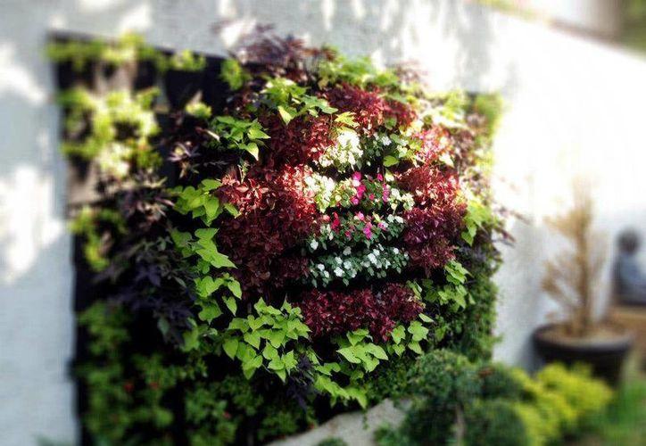 El jardín vertical ofrece beneficios para la estética y la reducción del calor del predio. La imagen corresponde al perfil en Facebook de Ecovida. (Facebook/Ecovida)
