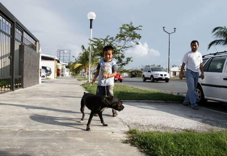 Uno de los principales objetivos de la campaña es fomentar la tenencia responsable de mascotas. (Juan Albornoz/SIPSE)