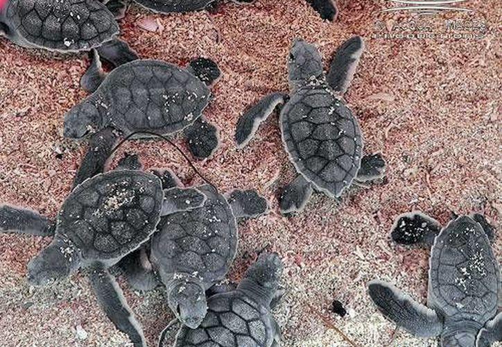 Con el programa 'Encaguamate' se busca inculcar a los estudiantes la cultura de protección a las tortugas. (Cortesía)