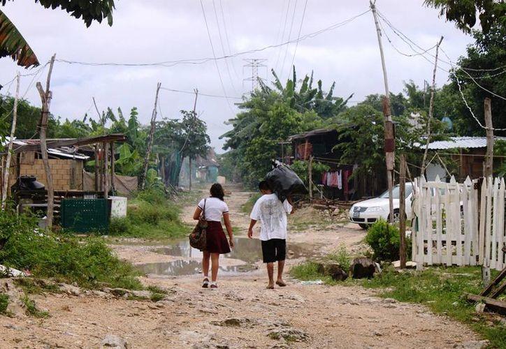 La organización Ciudades Educadoras realizará talleres ambientales en colonias cercanas a la selva local. (Daniel Pacheco/SIPSE)