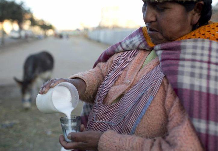 La vendedora de leche de burra, Andrea Aruquipa, una mujer indígena aymara sirve un vaso de leche de su burra para un cliente en El Alto, Bolivia. (Agencias)