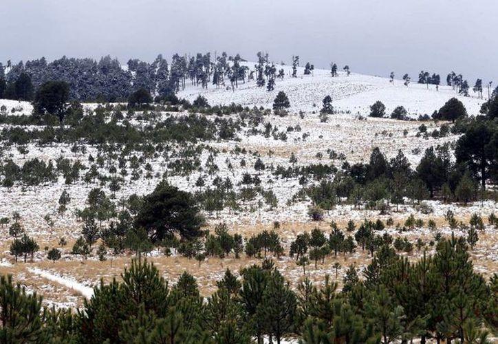 Las nevadas seguirán afectando las sierras del norte de México, por influencia del frente frío 24 y la primera tormenta invernal. La imagen es de Amecameca, en el centro del país, donde también se registra caída de nieve. (Notimex)