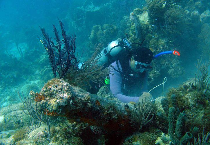 Científicos de la UNAM, de la CONANP y Healthy Reefs for Healthy People mantienen monitoreo. (Tijerina/SIPSE)