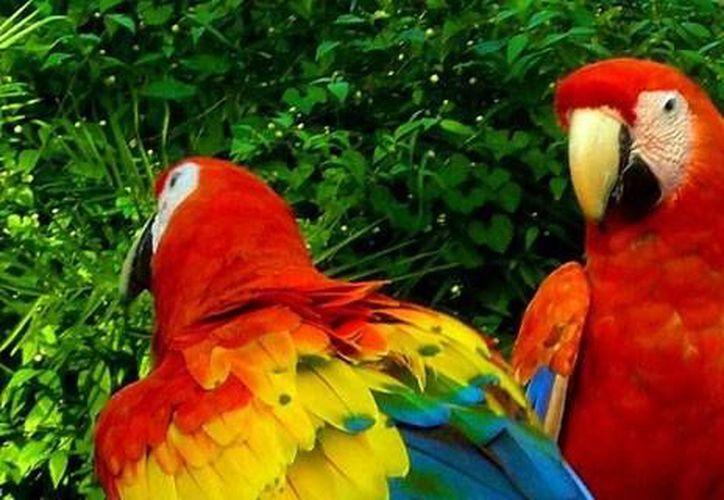 El nuevo tour de la Selva Lacandona va dirigido especialmente a los amantes de la naturaleza.(SIPSE/Archivo)