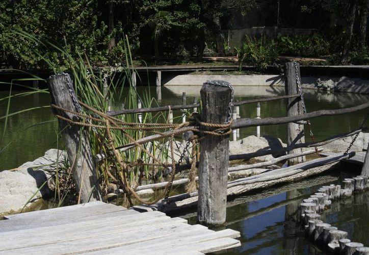 La falta de recursos del Ayuntamiento ha impedido la reparación de los puentes. (Harold Alcocer/SIPSE)