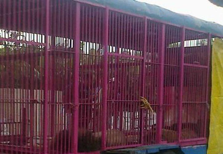 El circo donde se decomisaron los animales estaba instalado en Dzidzantún, Yucatán. (SIPSE)