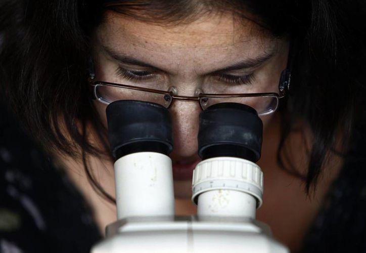 Científicos del Instituto de Investigación del Sida IrsiCaixa han identificado por primera vez en personas con Sida una variante genética que bloquea la entrada del VIH en células del sistema inmunitario, al impedir la producción de una proteína que facilita su penetración en el organismo. (EFE)