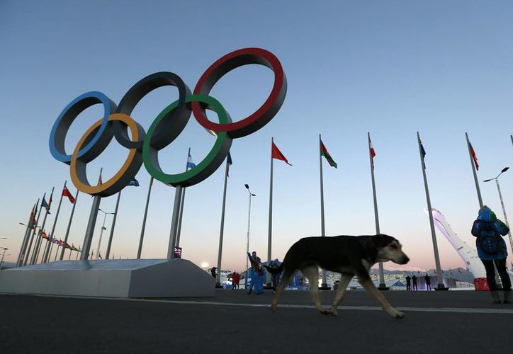 Ante la cercanía de la inauguración de los Juegos Olímpicos de Invierno en Sochi, autoridades se comprometieron a construir perreras y también a 'controlar la plaga'. (Agencias)