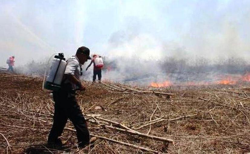 Marzo se caracteriza por presentar algo de sequía, por lo que podrían desatarse incendios con más facilidad. (Archivo/Sipse)