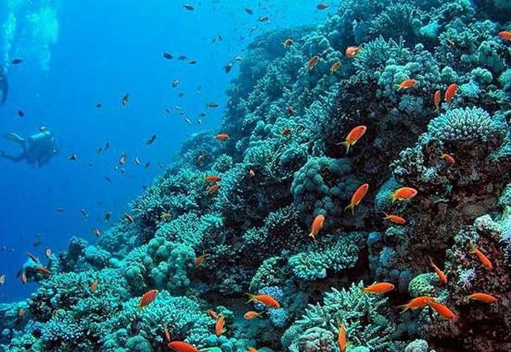 El Festival de los Océanos del Caribe Mexicano es una serie de actividades ecológicas, recreativas, gastronómicas y académicas. (Archivo/ SIPSE)