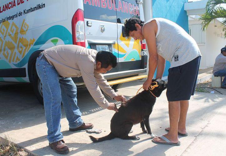 Recomiendan llevar a vacunar a los perros y gatos. (Gloria Poot/SIPSE)