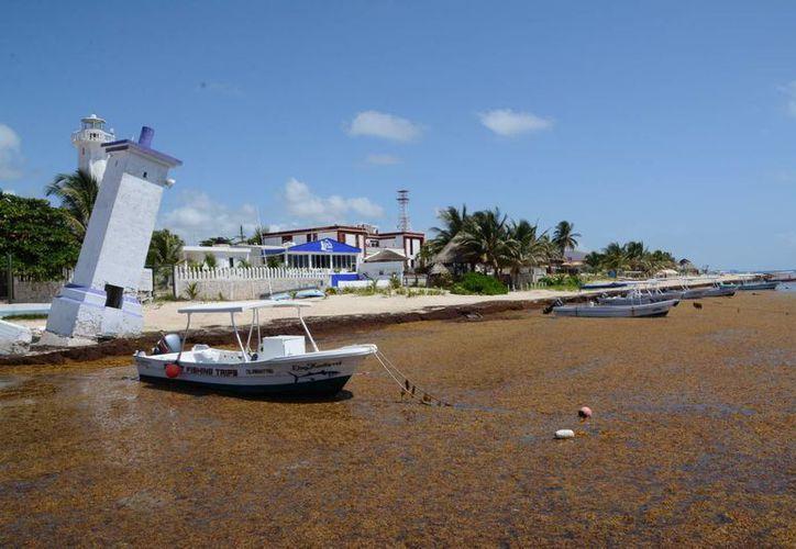 El sargazo en las costas de Quintana Roo es uno de los temas prioritarios para las autoridades municipales. (Redacción/SIPSE)