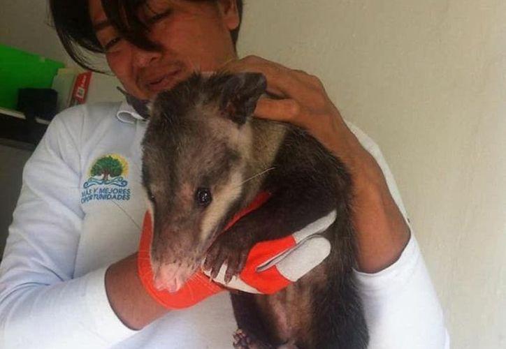 """Este año continuarán con trabajos del programa de """"Rescate de Fauna Silvestre"""". (Foto: Notimex)"""