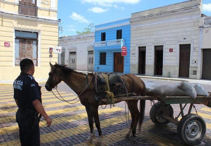 El caballo 'tierrero' fue decomisado en el centro de Mérida. (Ayuntamiento)