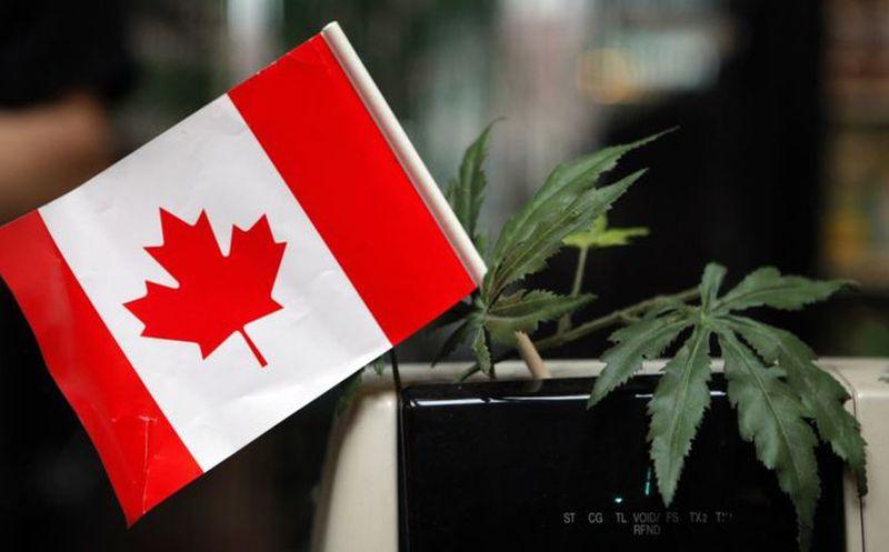 Empresa busca a catadores de marihuana en Canadá