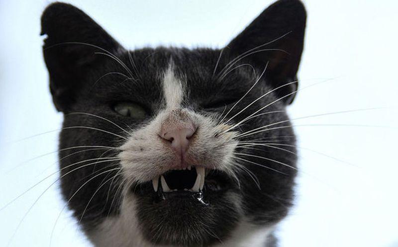 Insólito: Un gato sospechoso de un