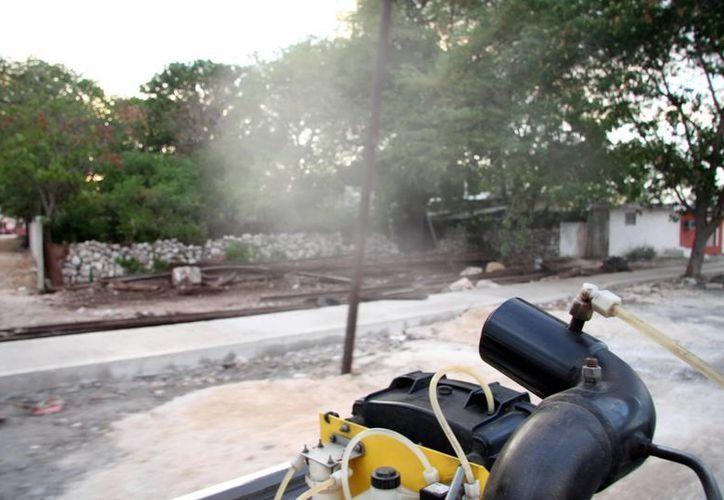 En Yucatán se han confirmado hasta el momento diez casos de chikungunya. Las autoridades redoblaron las acciones de limpieza y fumigación para prevenir un brote masivo. (SIPSE)