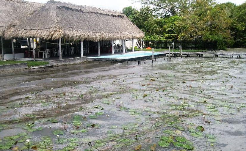 El autor del himno a Quintana Roo, Ramón Iván Suárez Caamal, compuso una canción sobre la contaminación a la laguna Bacalar.  (Javier Ortiz/SIPSE)