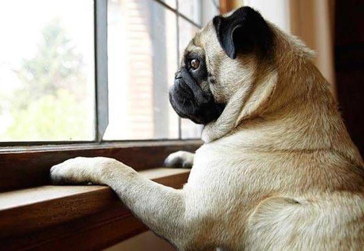 Si tu perro hace destrozos es porque su reacción es de pánico absoluto y no sabe cómo controlarlo. (Contexto/Internet)