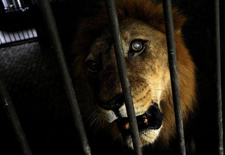 Bangladesh todavía no tiene una ley de eutanasia para animales con edad avanzada. (RT)