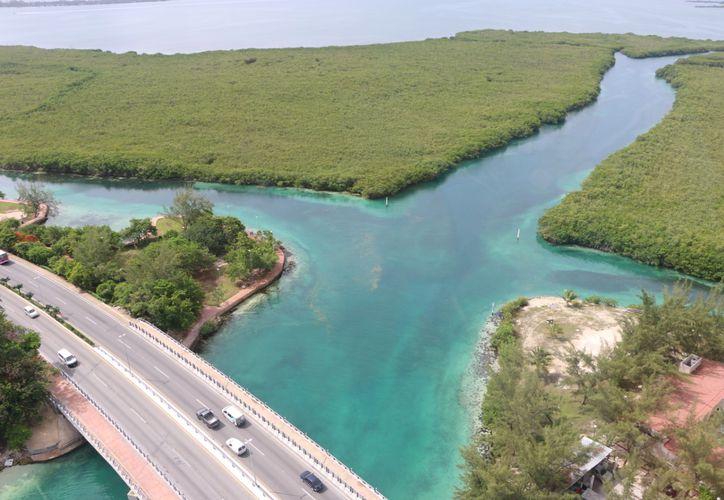 La vegetación tanto de manglar como de pastos marinos pueden capturar hasta tres veces más carbono que los bosques. (Paola Chiomante/SIPSE)