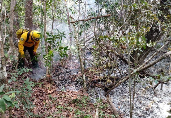 La Conafor ha destinado 36 brigadistas para sofocar los tres incendios forestales que afectan la Reserva de la Biósfera de Sian Ka'an. (Enrique Mena/SIPSE)