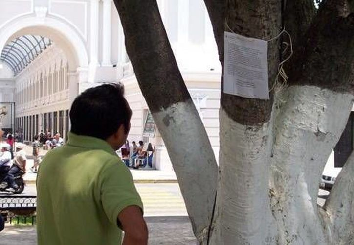 Los árboles albergan hojas con pensamientos de escritores famosos. (SIPSE)