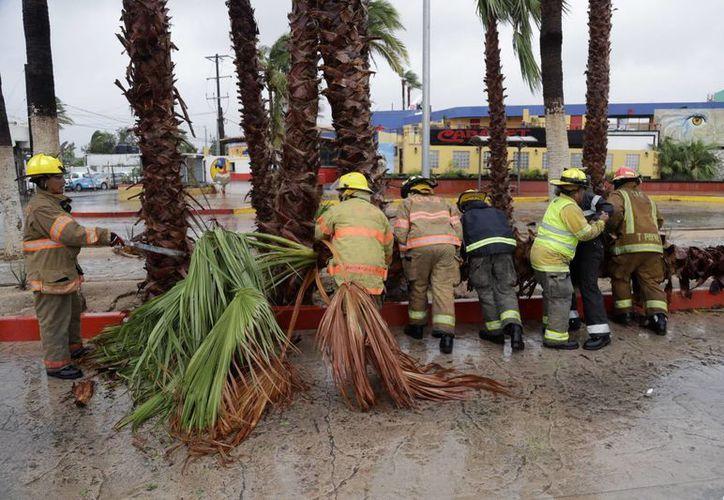 Bomberos remueven una palmera que cayó a causa de los fuertes vientos del huracán Newton a su paso por Cabo San Lucas, Baja California Sur, el 6 de septiembre de 2016. (Foto: AP/Eduardo Verdugo)