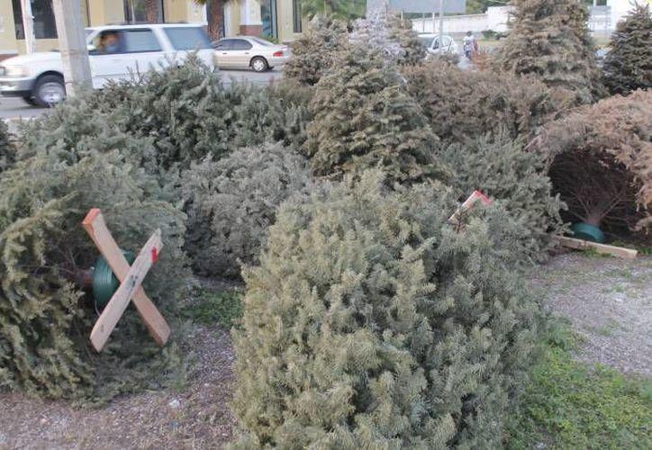 Tratan de evitar que los árboles sean tirados en lotes baldíos. (Redacción/SIPSE)
