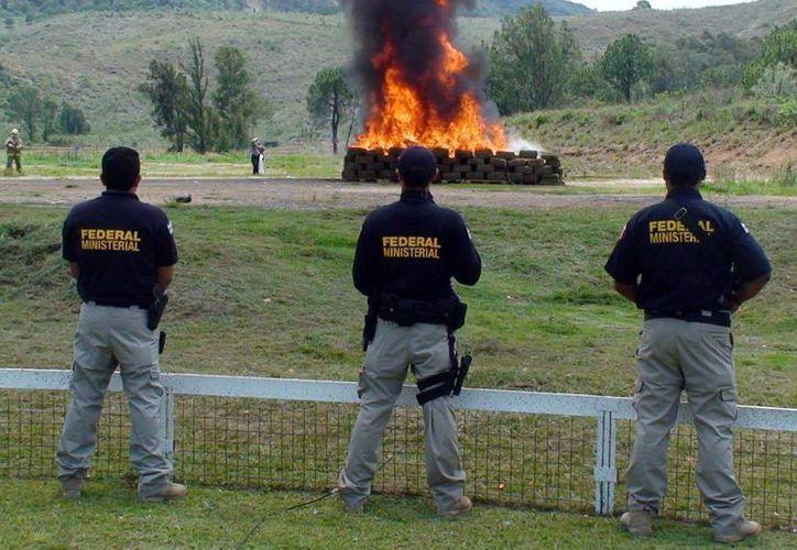 El IFAI requiere conocer a detalle el número de sembradíos y hectáreas de marihuana y amapola erradicados entre 2012 y 2013 en México. En la gráfica, incineración de más de tres toneladas de marihuana, en junio del año pasado en Jalisco. (Notimex)