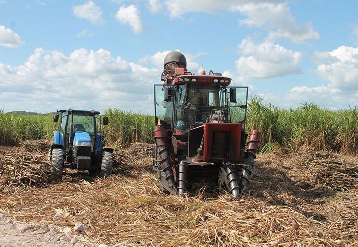 No se puede utilizar maquinaria en el campo quintanarroense. (Edgardo Rodríguez/SIPSE)
