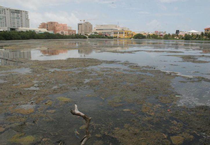 Urge también una limpieza a la laguna Nichupté. (Israel Leal/SIPSE)