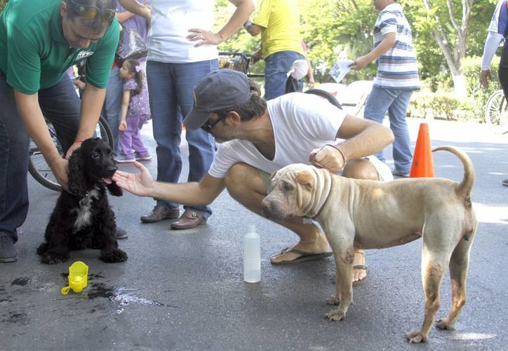 En el marco del Día Mundial de la Fauna, diversas asociaciones civiles hicieron un llamado a favor del cuidado a los animales, y anunciaron que buscarán la prohibición de la venta de mascotas en Yucatán. (SIPSE)