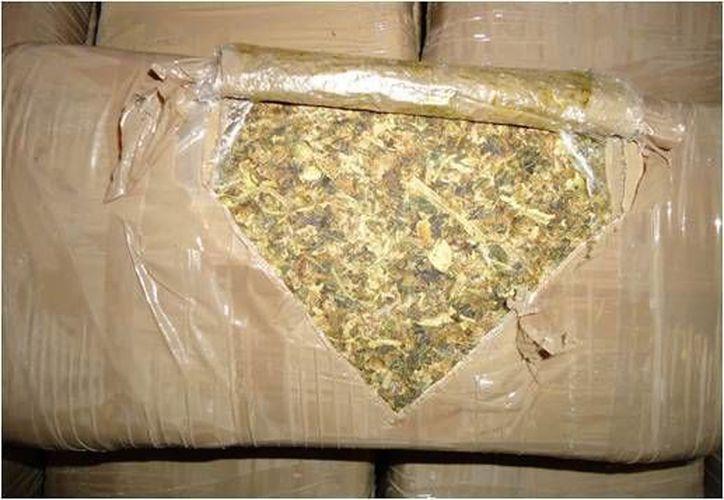 La posesión de marihuana entre cinco gramos hasta cinco kilogramos es un delito del fuero común. (Archivo/SIPSE)