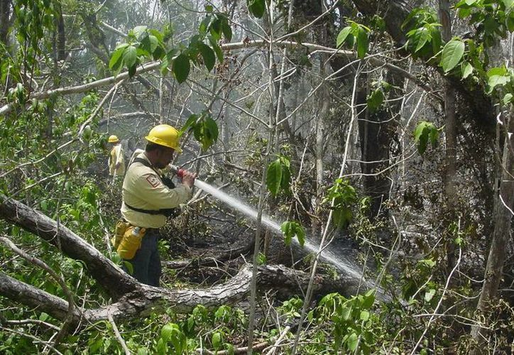 Quintana Roo cuenta con una superficie forestal estimada en cinco millones de hectáreas que estarán vigiladas por aire y a través de un radar. (Redacción/SIPSE)