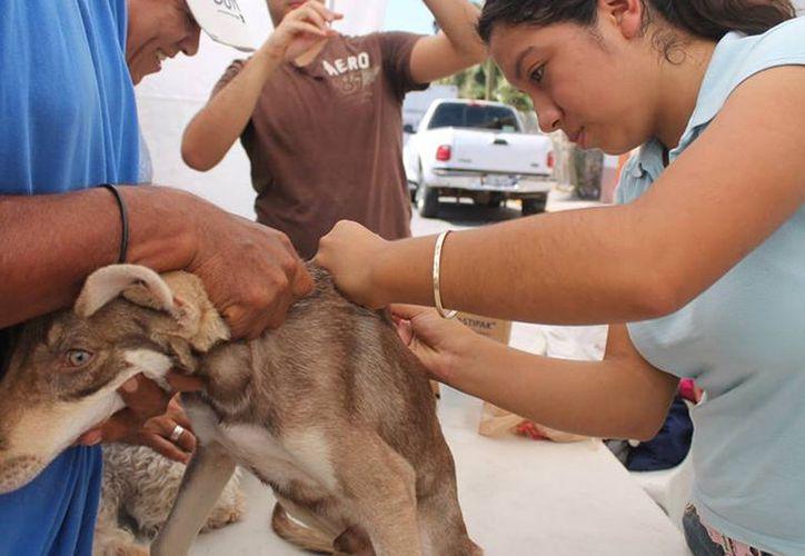"""La Secretaría de Salud envió """"refuerzos"""" para combatir el brote de rabia en Yucatán. (SIPSE)"""